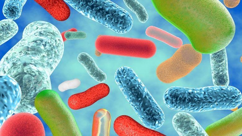 Betere genezing pockets door probiotica